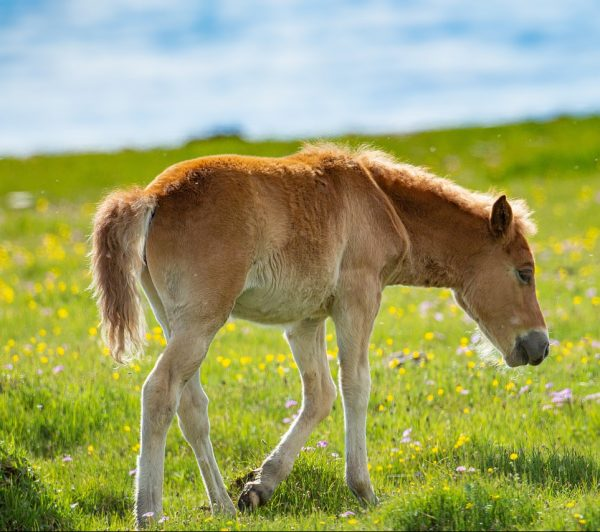 horse, animal, graze