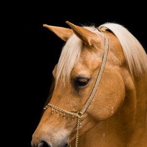 horse, portrait, mare